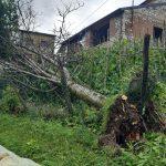 Nubifragi, grandinate e forte vento nella notte in Veneto: strage di alberi e allagamenti, un morto – FOTO