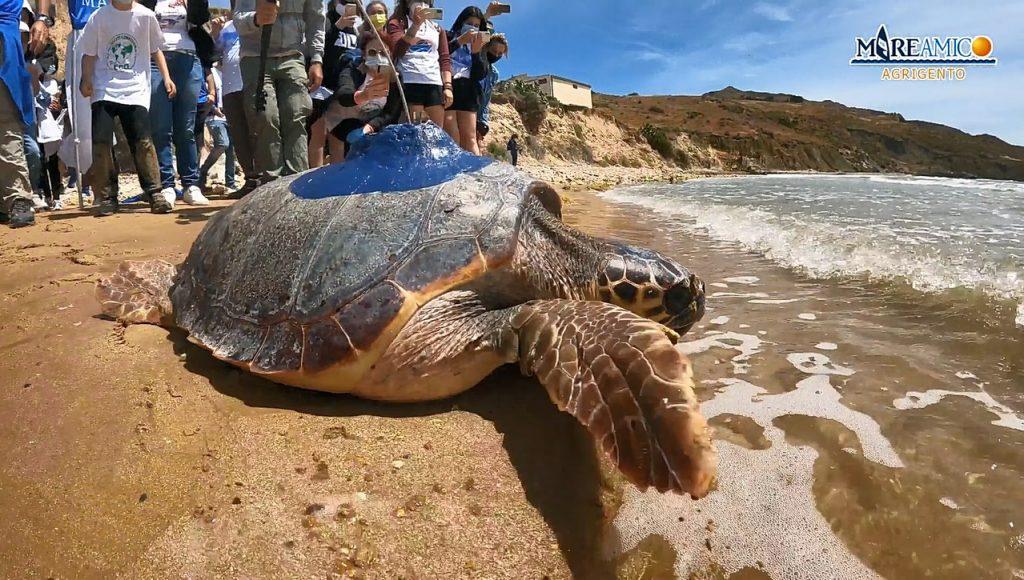 tartaruga onda itinerario