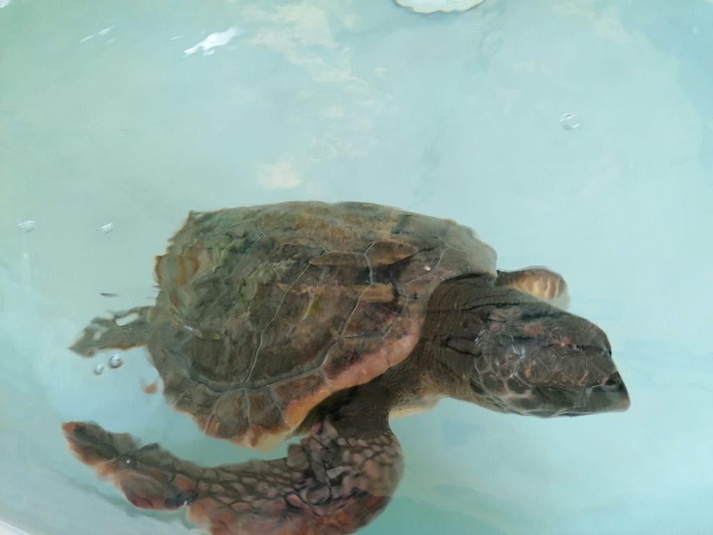 tartaruga zoomarine