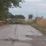 Violenta ondata di maltempo in Molise: grandinata a Petrella Tifernina, numerosi alberi crollati a Campomarino e Montecilfone [FOTO]