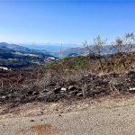 Incendi in Sicilia, ancora fiamme sulle Madonie: nuovi roghi a San Mauro Castelverde, molti animali morti – FOTO