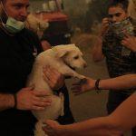 """Inferno di caldo e fiamme in Grecia, """"un'altra notte difficile"""": inarrestabili gli incendi sull'isola di Eubea [FOTO]"""