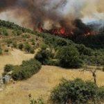 Emergenza incendi, morti, feriti e distruzione al Sud: Sicilia e Calabria chiedono lo stato di emergenza, evacuazioni nel Ragusano – FOTO e VIDEO