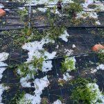 Maltempo, forti temporali colpiscono il Veneto: strade imbiancate da intense grandinate in diverse località, danni all'agricoltura – FOTO
