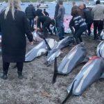 Massacro di delfini alle isole Far Oer: uccisi migliaia di esemplari nell'annuale caccia – FOTO