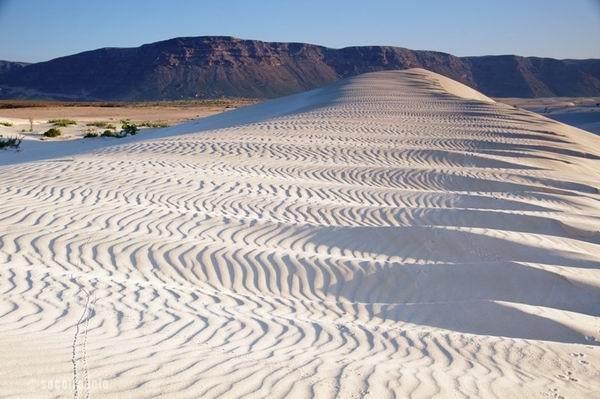 dune socotra