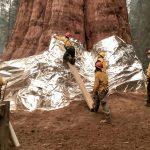 "Incendio minaccia le sequoie giganti in California: anche ""General Sherman"" avvolto in coperte ignifughe [FOTO]"