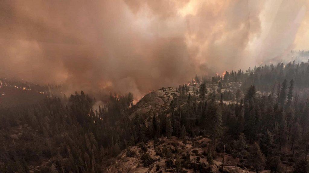 incendi california sequoie