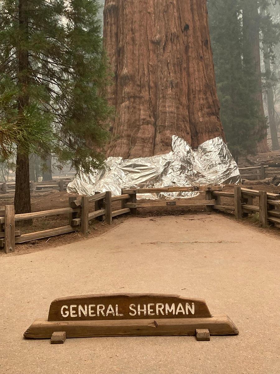 incendio in california sequoie