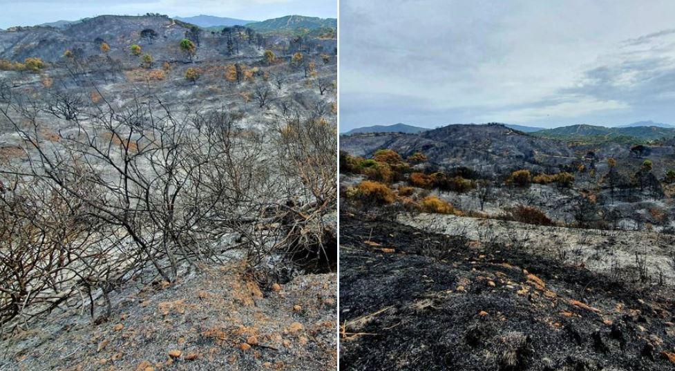 incendio spagna Sierra Bermeja