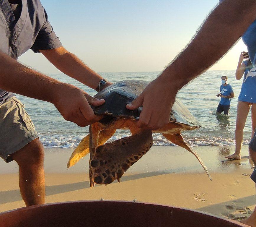 liberazione tartaruga