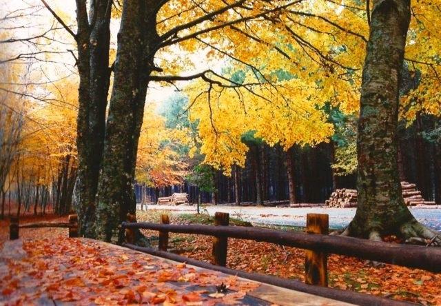 autunno liguria