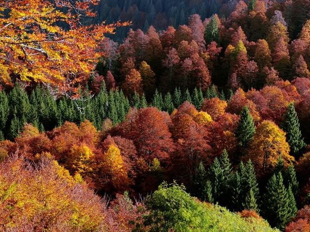 foresta cansiglio
