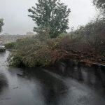 Maltempo in Sicilia, Francofonte in ginocchio: tetti divelti, alberi sradicati e smottamenti, verso lo stato di calamità – FOTO